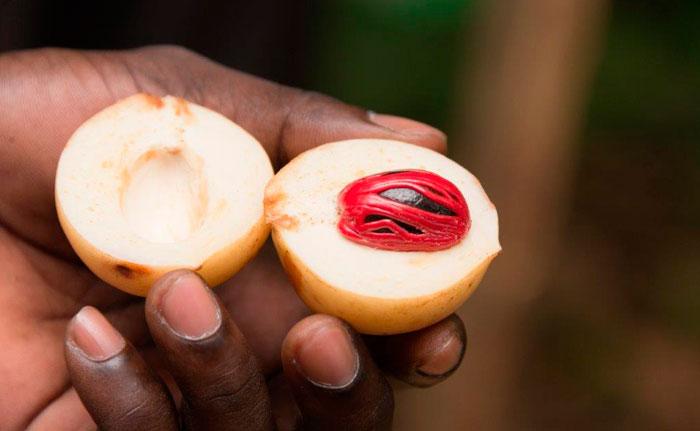 fruit du muscadier
