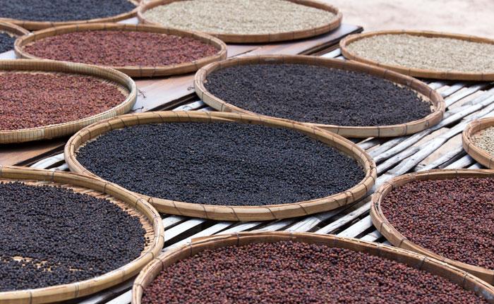 production poivre