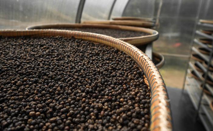 stockage poivre noir